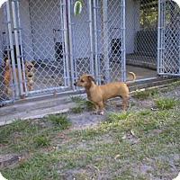Adopt A Pet :: 0959 Bella - Jacksonville, FL