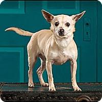 Adopt A Pet :: Diamond - Owensboro, KY