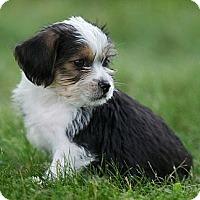 Adopt A Pet :: Elmo - Providence, RI