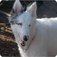 Adopt A Pet :: Keller - Ft. Myers, FL