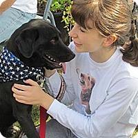 Adopt A Pet :: Prince - West Bridgewater, MA