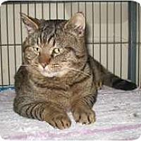 Adopt A Pet :: Jake - Shelton, WA