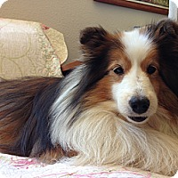 Adopt A Pet :: Sprite - San Diego, CA