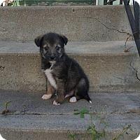 Adopt A Pet :: Chip - Saskatoon, SK