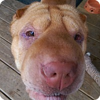 Adopt A Pet :: Linus - Barnegat Light, NJ
