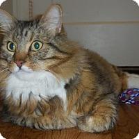 Adopt A Pet :: Henry - Davis, CA