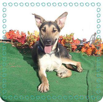German Shepherd Dog Mix Dog for adoption in Marietta, Georgia - RAMSES