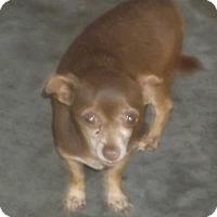 Adopt A Pet :: Cocomama - Bonifay, FL