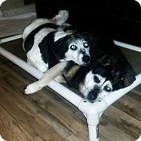 Hound (Unknown Type) Mix Dog for adoption in Westport, Connecticut - Cinder
