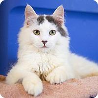 Adopt A Pet :: Arbus & Shiva - St. Paul, MN