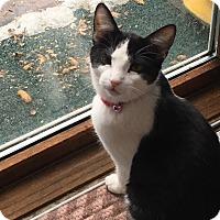 Adopt A Pet :: Taraji - Middleton, WI