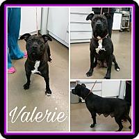 Adopt A Pet :: Valerie - Steger, IL