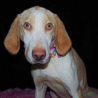 Adopt A Pet :: Dory - Waupaca, WI
