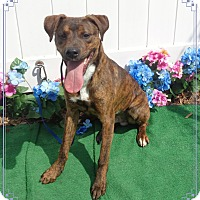 Adopt A Pet :: SOCRATES see also HERCULES - Marietta, GA