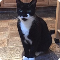 Adopt A Pet :: Pavarotti - Campbell, CA