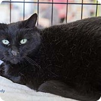 Adopt A Pet :: Kennedy - Merrifield, VA