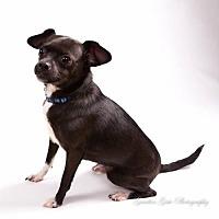 Adopt A Pet :: Nova - Elizabethtown, PA