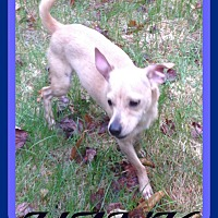 Adopt A Pet :: HANK - Jersey City, NJ