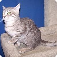 Adopt A Pet :: Merida - Colorado Springs, CO