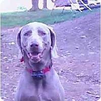 Adopt A Pet :: Theo - Attica, NY