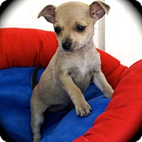 Adopt A Pet :: Reni - La Habra Heights, CA