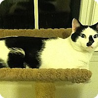 Adopt A Pet :: Cubby - New York, NY