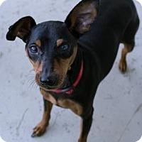 Adopt A Pet :: Jacky - Fairfax, VA