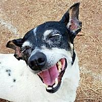Adopt A Pet :: Penny (GA) - Baton Rouge, LA