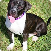 Adopt A Pet :: Dexter - Ft. Lauderdale, FL