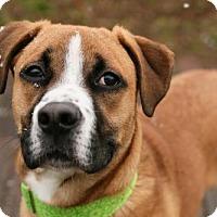 Adopt A Pet :: Dino - Cincinnati, OH