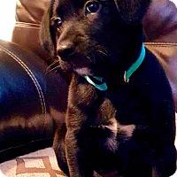 Adopt A Pet :: Austin - Waldorf, MD