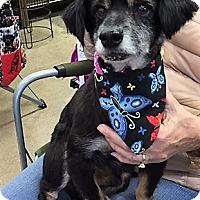 Adopt A Pet :: Rudy - Sacramento, CA