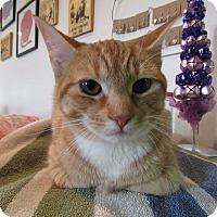 Adopt A Pet :: Persephone - Norwich, NY
