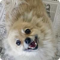Adopt A Pet :: Mimi - Halifax, NC
