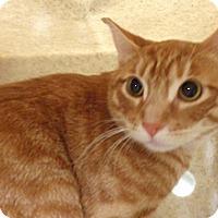 Adopt A Pet :: Ichigo - Wildomar, CA