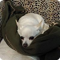Adopt A Pet :: SABRINA-ADOPTED - East Windsor, CT