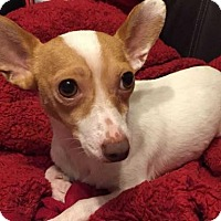 Adopt A Pet :: Marvin Suggs Muppet - Boston, MA