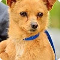 Adopt A Pet :: Carlos - Bakersfield, CA