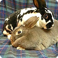 Adopt A Pet :: Coco and Chanel - Newport, DE