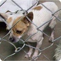 Adopt A Pet :: Emerson - 4 lb cutie - Phoenix, AZ