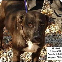 Adopt A Pet :: # 933-08 - ADOPTED! - Zanesville, OH