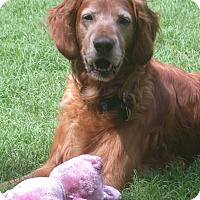 Adopt A Pet :: Angus - Aledo, TX