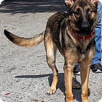 Adopt A Pet :: Shelley - Inverness, FL