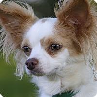 Adopt A Pet :: FLICK - Ile-Perrot, QC