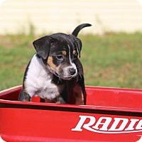 Adopt A Pet :: Blanca - Gainesville, FL