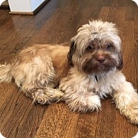 Adopt A Pet :: Timmy - Atlanta, GA