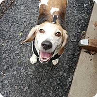 Adopt A Pet :: Tobie - Pottsville, PA