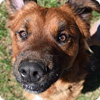 Adopt A Pet :: Bear - Richand, NY