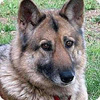 Adopt A Pet :: Oakley - Pike Road, AL