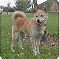 Adopt A Pet :: Halla - Southern California, CA